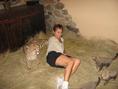 Male and Female (Cheetahs, Serval and F1 Savannah kittens)