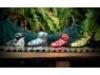 รูปย่อ รองเท้าเสก็ต โรลเลอร์เบลด รุ่น XT ยี่ห้อ Xiang Tian ปกติ 2,200 ขายเพียง 1,700 บาท รูปที่5