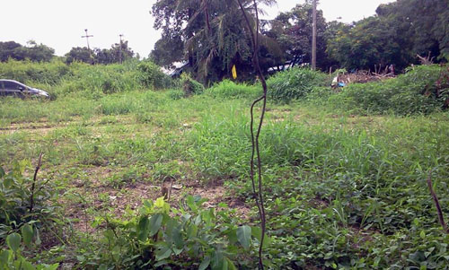 Land for sale @ Chiang Mai รูปที่ 1