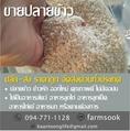 ขายปลายข้าว ปลีก-ส่ง ราคาถูก จัดส่งด่วนทั่วประเทศ (โดย มือเปื้อนดิน)