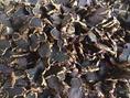 ขาย กระชายดำแห้ง  Dried Black Galingale or Black Ginger on sale .