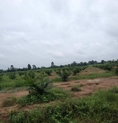 Land for sale 100 Rai in Palm Grove, Lamduan, Sa Kaeo.