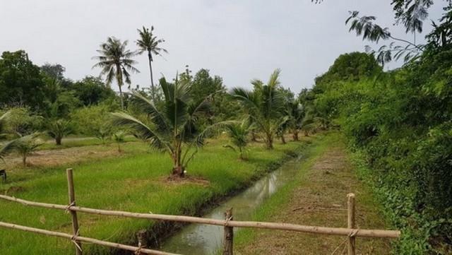 ขายที่ดินพร้อมบ้านสวนอัมพวา จังหวัดสมุทรสงคราม ติดคลอง มีศาลาริมน้ำ บรรยากาศสวนเงียบสงบ รูปที่ 1