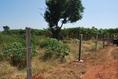 ขายที่ดินเกษตรอ.เดิมบาง จ.สุพรรณ ติดถนน3ด้าน 1ไร่1งาน44วา 300,000
