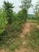 รูปย่อ ขายที่ดิน 83 ไร่ โพธาราม จ.ราชบุรี เหมาะสร้างฟาร์มสร้างโรงงานได้ เนื้อที่สวย ไม่ต้องถม เสมอถนน โทร 0869064170 รูปที่5