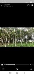 ขาย ที่ดิน ปลูกยางพารา200ต้นต้นสัก25ต้น แม่ลาว เชียงราย 2 ไร่ 2 งาน 64 ตร.วา ที่ติดถนน