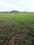 ขายที่ดินทำการเกษตรเขตบัววัฒนา อ.หนองไผ่ จ.เพชรบูรณ์
