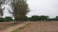 ขายที่ดิน 54 ไร่ เวียงป่าเป้า ทำเลดีไม่ไกลถนนใหญ่ ขายถูก ๆ ดินดี น้ำดี มีบ่อเก็บน้ำ