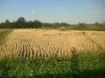 ขายที่ดิน 2ไร่ 80 ตร.วา ราคา 6.4ล้านบาท ใกล้วัดร้องขุ่น เชียงราย