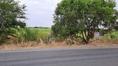 ขาย ที่ดิน เนื้อที่ 2 ไร่อ.เมือง จ.ลพบุรี 2 ไร่ ติดถนนลาดยาง 2 เลน