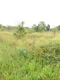 ขาย ที่ดิน 3แปลงติดกันต.เทพาลัย อ.คง จ.นครราชสีมา 5 ไร่ 1 งาน ห่างจากถนนมิตรภาพประมาณ800เมตร