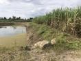 ขาย ที่ดิน ที่ดินหนองกวาง โพธาราม 4 ไร่ 0 งาน 89 ตร.วา
